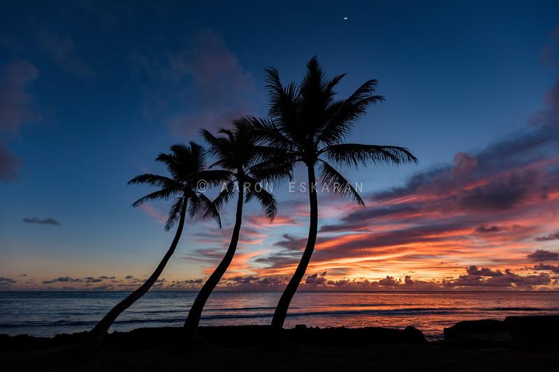 3 Palm Sunrise