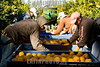 Argentina : Cosecha manual de naranjas para exportacion / Manual harvesting of oranges for export / Argentinien : Industrie und Handel - Ernte von Orangen - Orangenernte © Geronimo Molina/Sub.Coop/LATINPHOTO.org (This picture is blocked for publication in France)