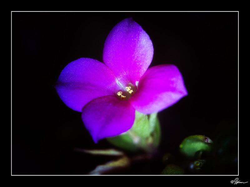 Mois 5 - Fleur(s)