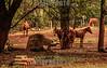 Argentina : 600 hectareas iguazu 2 y ultima entrega - Selva Iriapu , 33700 Puerto Iguazú , 3370 Puerto Iguazu , Misiónes / Argentinien : Region Iguaçu © Santiago Debenedetti/LATINPHOTO.org