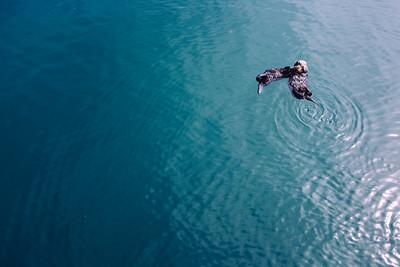 Morro Bay Otter