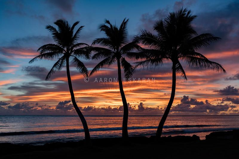 3 Palm Sunrise_1