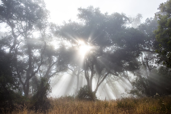 big_sur_trees-1