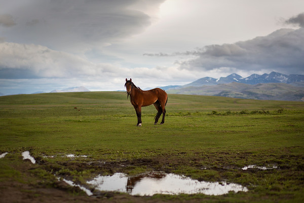 horse_color