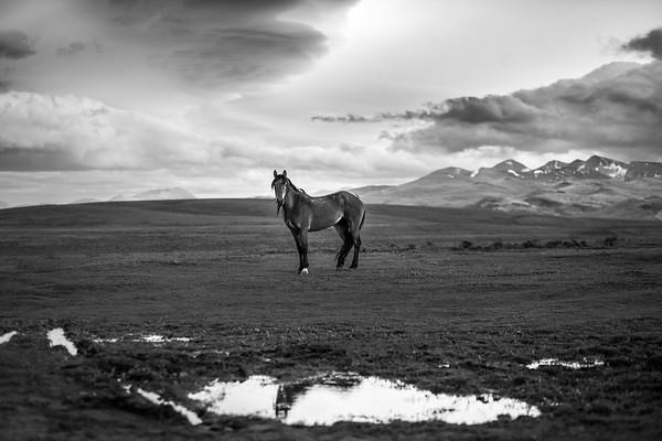 horse_huge_bw