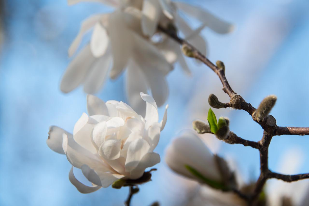 FlowersTrees-4.jpg