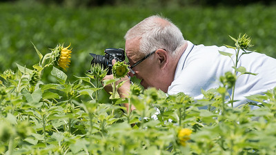 7/7/2017 - My friend and photographer David Wolfe getting real close to the buzzing bees all over this sunflower at McKee-Beshers, ©2017 Jacqui South Photography