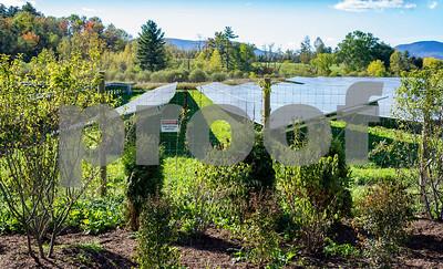 Robert Layman / Staff Photo  A solar farm on Cold River Road is seen here through short vegetation.