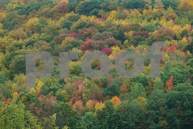 Robert Layman / Staff Photo A mountainside of trees in Ira, Vermont, October 9, 2017.