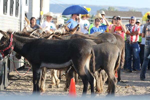 Scotts Bluff County Fair -- Donkey Racing