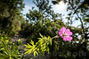 Blume beim Wanderweg Jakobsleoter in 4622 Egerkingen © Patrick Lüthy/IMAGOpress.com
