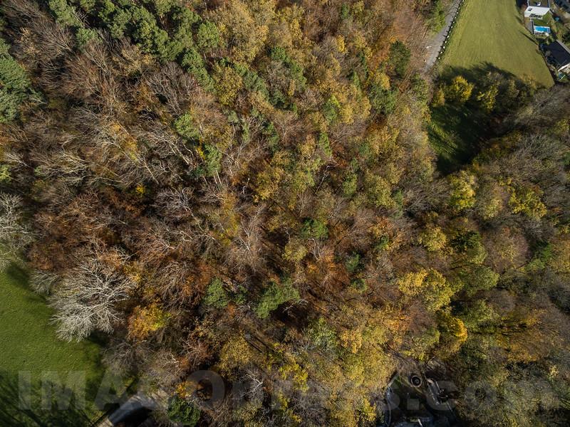 Wald © Patrick Lüthy/IMAGOpress.com