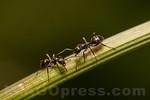 Ants . Valsesia , Piedmont , Italy / Ameisen . Valsesia , Piemont , Italien � Silvina Enrietti/IMAGOpress.com 2016