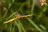 Butterfly - Lepidoptera order . Valsesia , Piemonte , Italia / Schmetterling - Ordnung Lepidoptera .  Valsesia , Piemont , Italien © Silvina Enrietti/IMAGOpress.com 2016