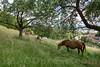 Pferde auf einer Weide in 4622 Egerkingen © Patrick Lüthy/IMAGOpress.com