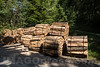 Holz in 4622 Egerkingen © Patrick Lüthy/IMAGOpress.com