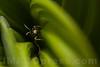 Wasp - Hymenoptera order . Valsesia , Piemonte , Italia / Wespe - Ordnung Hymenoptera .  Valsesia , Piemont , Italien © Silvina Enrietti/IMAGOpress.com 2016