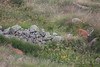 Capreolus capreolus . Valsesia , Piedmont , Italy / Capreolus capreolus . Valsesia , Piemont , Italien © Silvina Enrietti/IMAGOpress.com 2016