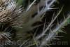 Asteraceae . Valsesia, Piedmont, Italy / Valsesia , Piedmont , Italy / Asteraceae . Valsesia , Piemont , Italien © Silvina Enrietti/IMAGOpress.com 2016