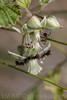 Ants . Valsesia , Piedmont , Italy / Ameisen . Valsesia , Piemont , Italien © Silvina Enrietti/IMAGOpress.com 2016