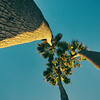 Three Palms Light