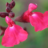 Nothhelfer_George Flower Macro