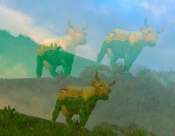 Flagg_Judy_Multiple Cows