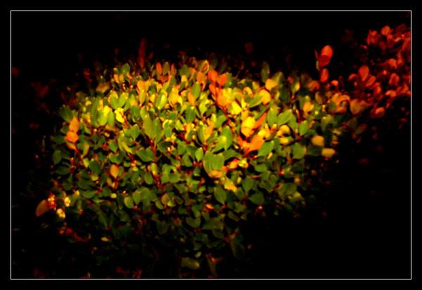 BauL_Paint with Light