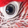 Bray,Mike_Macro_The Real Macaw