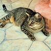Esther Spektor - My friend's cat  4232746286_3b596aaaa3_o