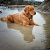 Bray, Mike-Pets portrait2