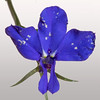 BenV Iris 1to1 05 02