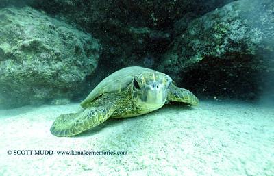 greenseaturtle turtleheaven3 010318wed