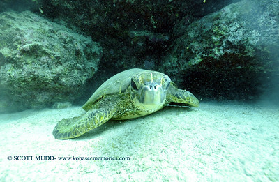 greenseaturtle turtleheaven2 010318wed