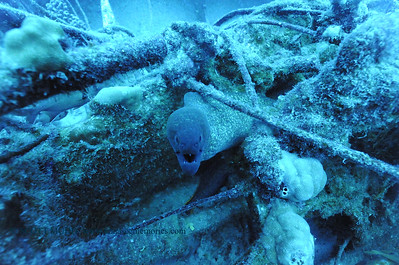 yellowmarginmoray nakedlady2 010218tues