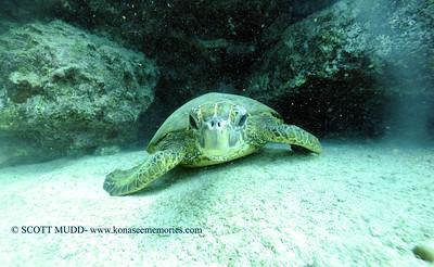 greenseaturtle turtleheaven 010318wed
