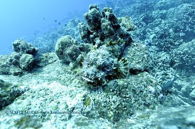 titanscorpionfish carousel 010218tues