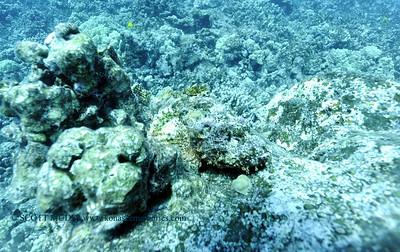 titanscorpionfish carousel3 010218tues