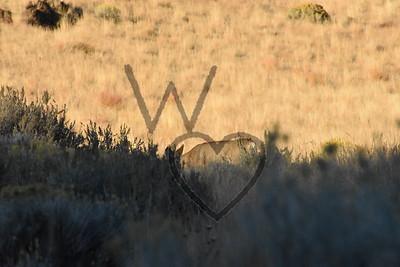 Views & Wildlife 10/14/18