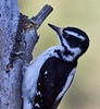 _1177235 Woodpecker_3574x3888