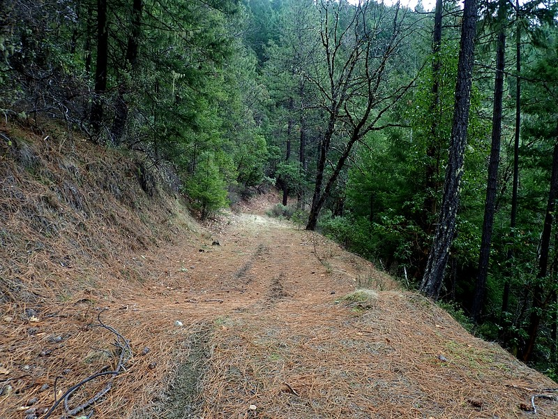 Layton Mine Ditch Trail Williams Oregon
