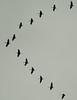 DSC00020 Sandhill Cranes