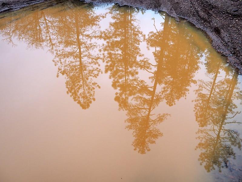 Illinois River Deer Creek Selma Oregon