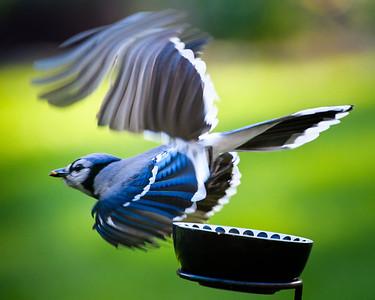 2018-03-16 Birds at the feeder