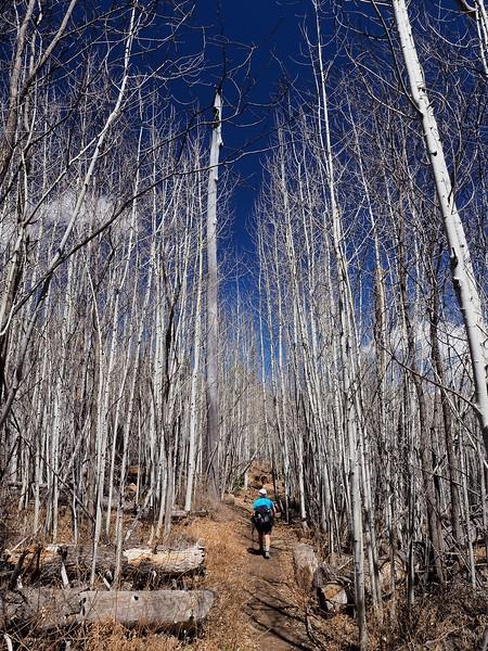 Marshall Gulch Pusch Ridge Wilderness Mount Lemmon Arizona
