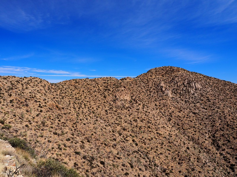 Wasson Peak Saguaro National Park Arizona