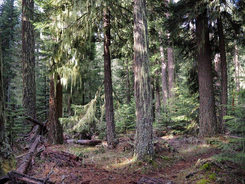 Lost Creek Falls Jackson County Oregon