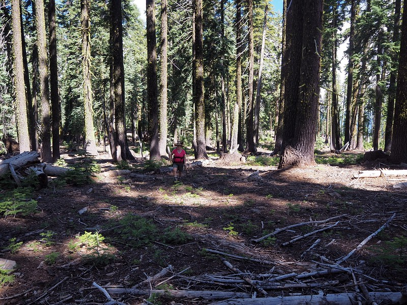 Surveyor Mountain Fremint-Winema National Forest Oregon