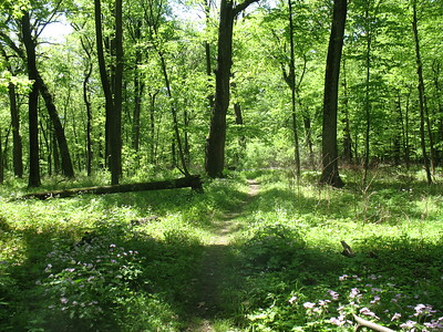 2018-05-23 SUST 360 Busse Forest