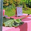 Winners of Rhubarb Leaf Contest
